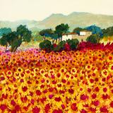 Sunflower Sunset, Tuscany Poster von Hazel Barker