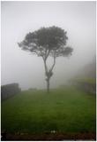 Tree in the Fog Machu Picchu Peru Pósters