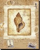 Ship To Shore Shells III Bedruckte aufgespannte Leinwand von Lisa Ven Vertloh