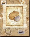 Ship To Shore Shells I Bedruckte aufgespannte Leinwand von Lisa Ven Vertloh