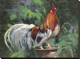 Red And White Rooster Toile tendue sur châssis par Nenad Mirkovich