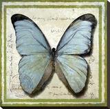 Papillon Toile tendue sur châssis par Karen J. Williams