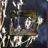 Winter Thistle Reproducción de lámina sobre lienzo por Suzanne Silk