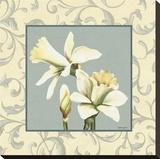 Daffodils With Scroll Opspændt lærredstryk af Catherine Jones