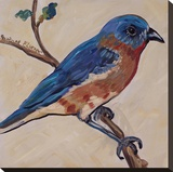 Bird XII Stretched Canvas Print by Suzanne Etienne