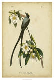 Tyran des savanes Reproduction procédé giclée par John James Audubon