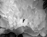 Macro Flower II Art by Brian Moore