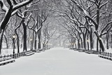 Central Park en hiver, New York Poster par Rudy Sulgan