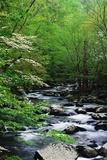 Stream in Lush Forest Affiches par Ron Watts