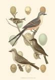 British Birds and Eggs I Kunstdrucke