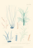 Delicate Coral III Posters by F. Reeve