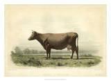 Vache D'Angeln Giclée-tryk af I. Bonheur