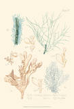 Delicate Coral I Posters by F. Reeve