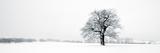 Winter Oaks Giclée-tryk af Joseph Eta