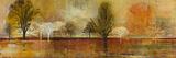Tree Shadows II Reproduction procédé giclée par  Douglas