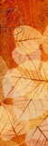 Falling Leaves I Giclee Print by Malcolm Sanders