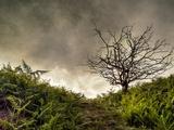 The Gift Fotografisk trykk av Mark Gemmell