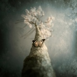 A Small Butterfly Sitting on a Tree with Overlaid Textures Stampa fotografica di Luis Beltran