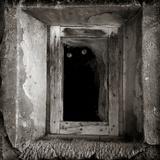 A Black Cat Inside a Window Stampa fotografica di Luis Beltran
