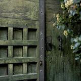 Evergreen Fotografisk trykk av Bernard Jaubert
