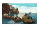 Santa Catalina Island, California - View of the Seal Rocks Stampe di  Lantern Press