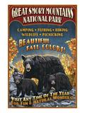 Black Bears - Great Smoky Mountain National Park, Tennessee Art by  Lantern Press