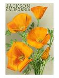 Jackson, California - The Californian Poppy Flowers Láminas por  Lantern Press