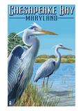 Chesapeake Bay, Maryland - Blue Heron Prints by  Lantern Press