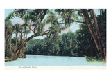 Florida - View of a Florida River Prints by  Lantern Press