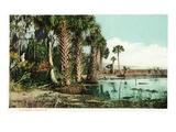 Florida - View of Swamps and Palms Kunstdrucke von  Lantern Press