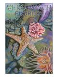 Tidepools - Vero Beach, Florida Kunstdrucke von  Lantern Press