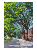 Knoxville, Tennessee - University of Tennessee - Scenic Driveway View on the Campus Poster von  Lantern Press
