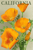 California - Poppies Pôsteres por  Lantern Press