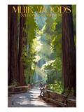 Muir Woods National Monument, California - Pathway 高品質プリント : ランターン・プレス
