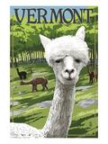 Vermont - Alpaca Scene Posters af  Lantern Press
