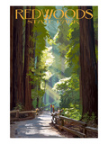 Redwoods State Park - Pathway in Trees Premium Giclee-trykk av  Lantern Press