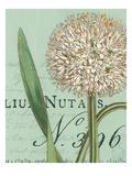 Botanique Bleu II Reproduction giclée Premium par Hugo Wild