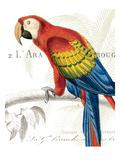 Parrot Botanique II Reproduction giclée Premium par Hugo Wild