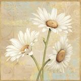 Beautiful Daisies II Pôsteres por Daphne Brissonnet