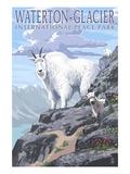 Waterton-Glacier International Peace Park - Mountain Goat and Baby Giclée-Premiumdruck von  Lantern Press