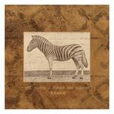 Zebra Prints by Hugo Wild
