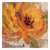Fiery Dahlias I Giclée-Premiumdruck von Silvia Vassileva