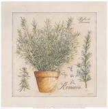 Herbes de Provence III Kunst af Laurence David