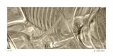 Translucent Monochrome 2 Reproduction procédé giclée par Kate Blacklock