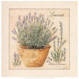 Herbes de Provence II Poster von Laurence David