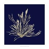 Seaweed on Navy III Poster por  Vision Studio