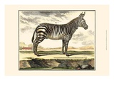 Diderot Zebra Prints by Denis Diderot
