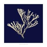Seaweed on Navy II Posters por  Vision Studio