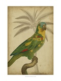 Parrot and Palm II Kunst von  Vision Studio