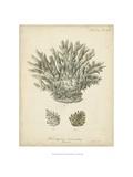 Coral Collection VII Prints by Johann Esper